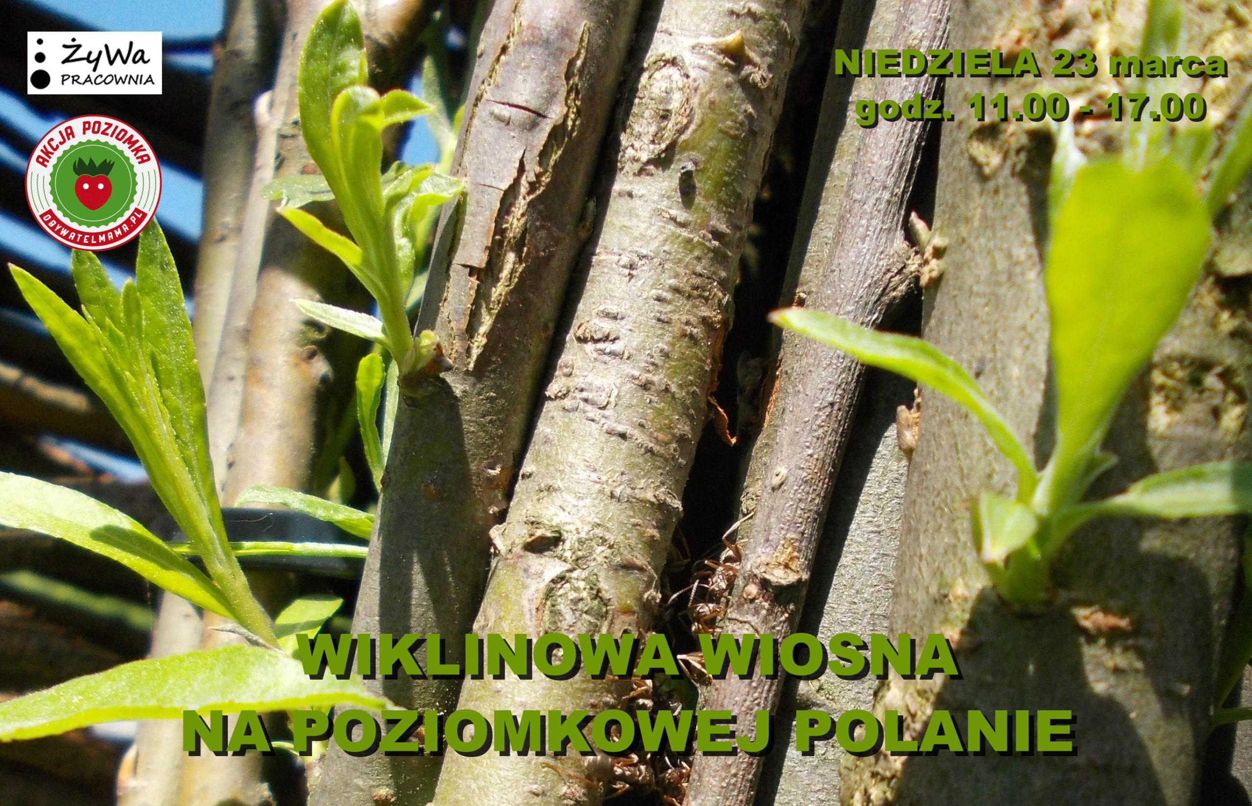 wiklinowa wiosna na poziomkowej polanie_23 marca
